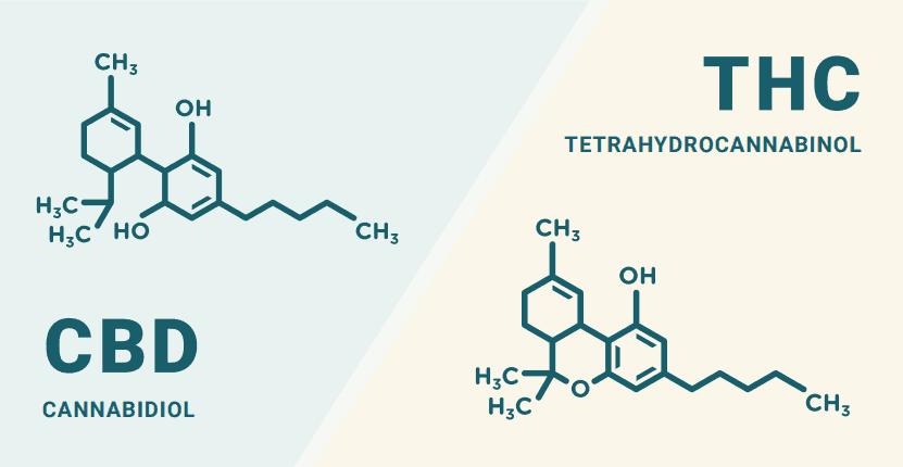 THC and CBD Img