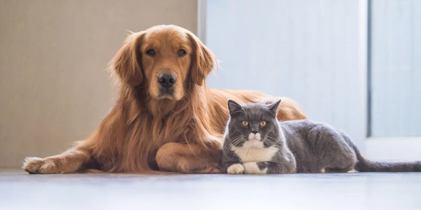 Can CBD Be Used To Treat Pets?