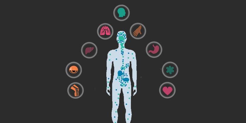 The Benefits of CBD on the Endocannabinoid System
