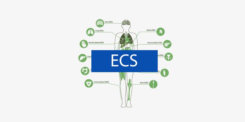 Your Endocannabinoid System