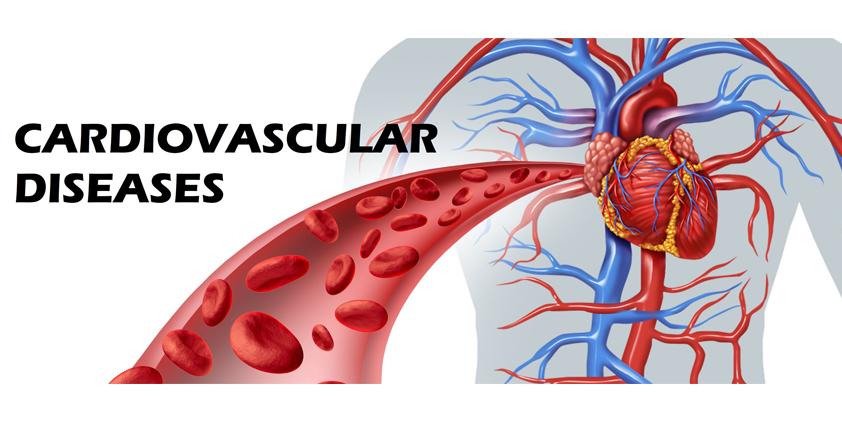 Cardiovascular Disease and Cannabis Effect