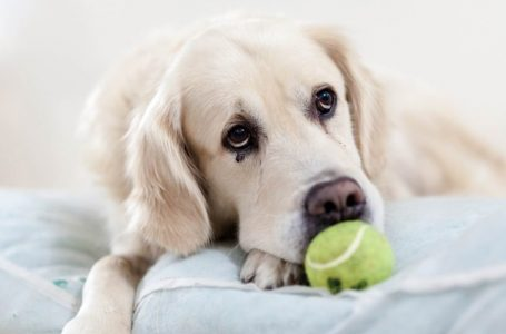 Using CBD To Help Pets With Diseases and Ailments