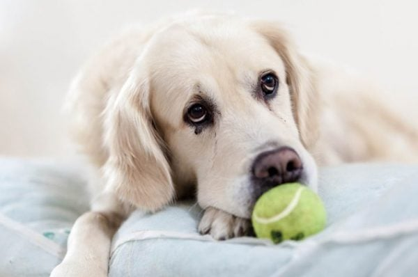 CBD for pets img