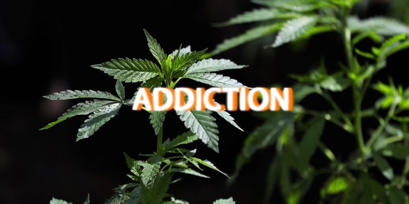 CBD as a Treatment for Marijuana Addiction