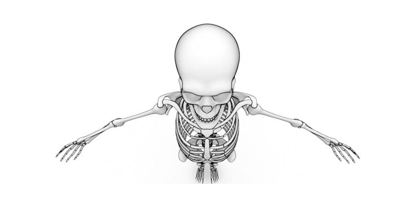 CBD Use for Bone Health