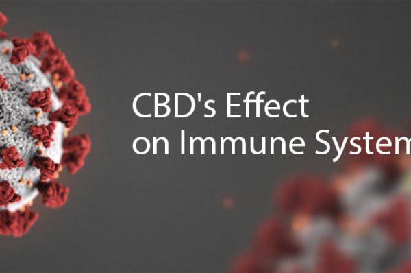 CBD effect on Immune system