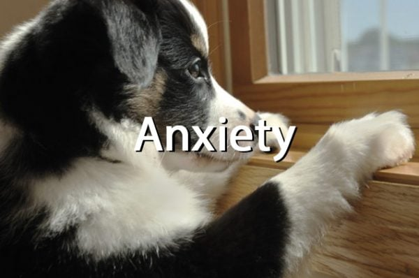 Pets anxiety