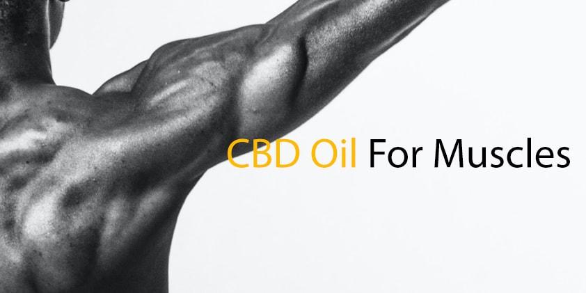 CBD Oil For Muscles