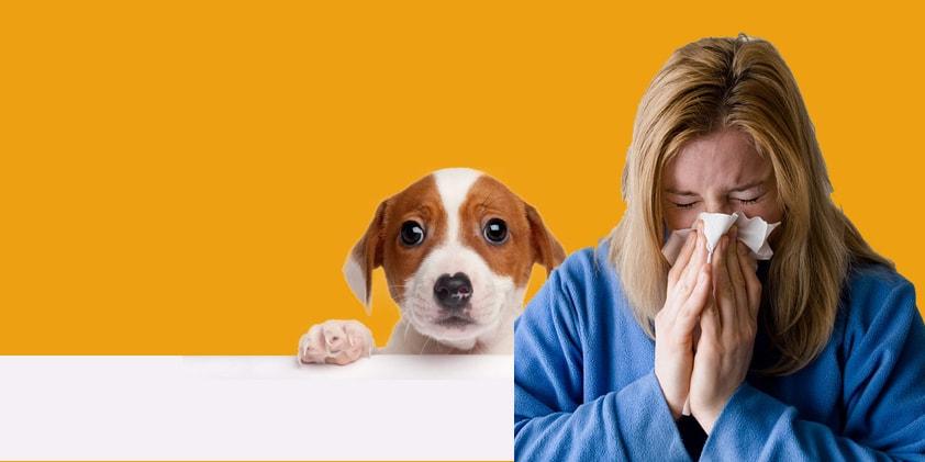 CBD Oil For Pet Allergy