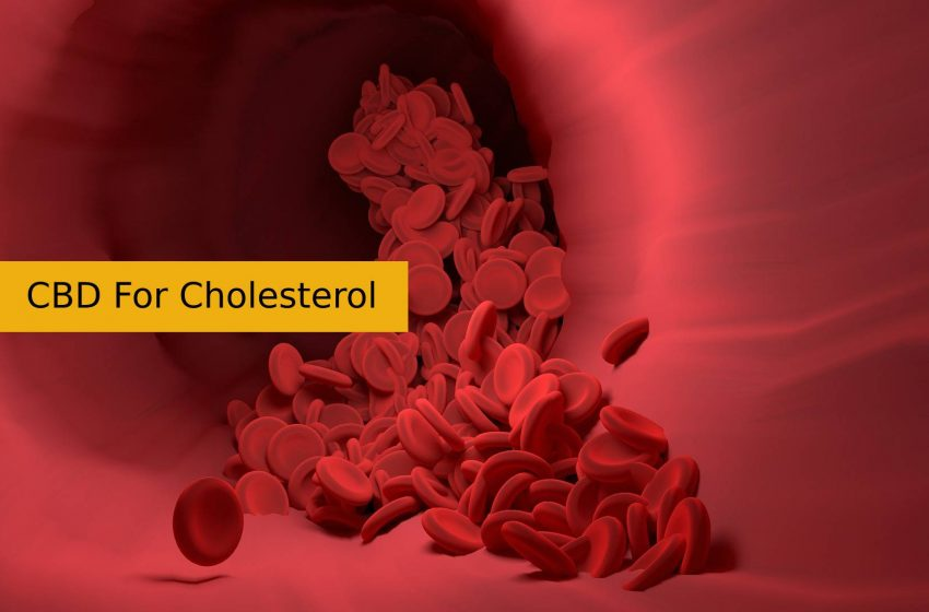 CBD For Cholesterol
