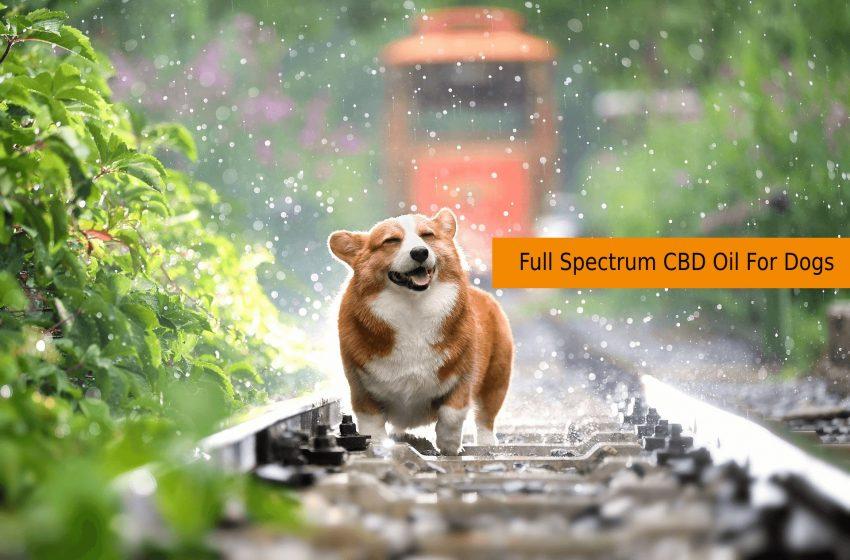 Full Spectrum CBD Oil For Dogs